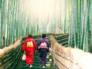 Japan_Kyoto_Arashiyama_Bamboo_Grove_kimono_shutterstock_791398324