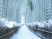 Kyoto Sagano Bamboo grove in winter