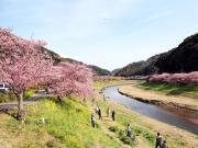 Japan_Shizuoka_Izu_Kawazu_Sakura_Cherry_blossom_shutterstock_727653895 (1)