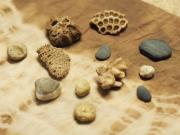 3絞り染めには屋久島のサンゴや小石を使用します