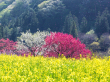 Japan_Nagano_Hanamomo_no_sato_shutterstock_1223276776