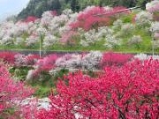 Japan_Nagano_hamanono_no_sato_shutterstock_534071998
