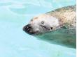 Hokkaido_Asahiyama_Zoo_shutterstock_212349817