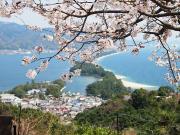 B0800 天橋立(桜)