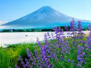 Japan_Yamanashi_Mr_Fuji _Kawaguchi_lake_Lavender_shutterstock_1425249995