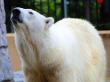 Hokkaido_Asahiyama_Zoo_shutterstock_555572869
