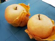 pear_picking_Lin