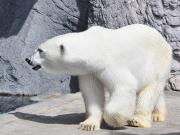 Hokkaido_Asahiyama_Zoo_shutterstock_438063151