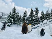 旭山動物園1