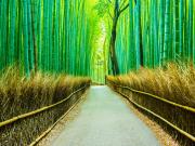 Japan_Kyoto_Arashiyama_Bamboo_Forest_shutterstock_453847159