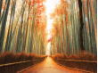 sagano chikurin autumn