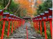 kifune autumn2       ※copywriter【photo imamiya yasuhiro】