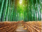 Japan_Kyoto_Arashiyama_Bamboo Forest_shutterstock_763721149