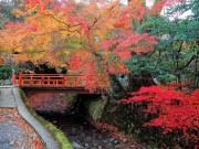 Japan_Kyoto_Ohara_Sanzen In_Temple_Garden_autumn_fall_shutterstock_472758226