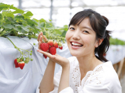 Strawberry picking from Tokyo