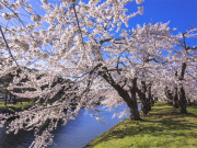goryokaku_Fotolia_110738136_Subscription_Monthly_M