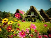 Japan_Gifu_Shirakawago_Village_Autumn_shutterstock_344759138