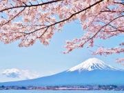Japan_Yamanashi_Kawaguchiko_Mt Fuji_cherry blossom_shutterstock_446671864