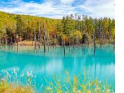 Hokkaido_Biei_Blue_Pond_shutterstock_1202113783