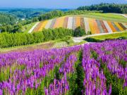 Shikisai-no-oka, Biei_ Hokkaido_shutterstock_1291856959