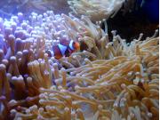 Japan_Hokkaido_Chitose_Aquarium_shutterstock_1646528053