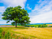 japan_hokkaido_biei_patchwork_field_seven_stars_tree_shutterstock_654574165