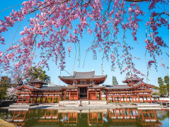 桜と鳳凰堂