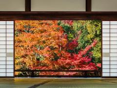 【オンライン・アカデミー】日本美術講座 絵師たちの戦国時代に迫る!1回のみ参加も可能<全3回/日本語/Zoom使用>