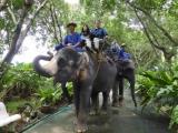 象さんに乗ったぞう