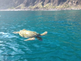 Huge group of sea turtles right up to the boat