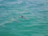 イルカです。