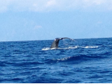 Just one of the many whales we saw