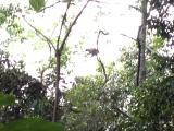 木登カンガルー。見えますか?