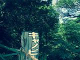 キャノッピウォークの入口