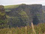 モハーの崖に野アザミ