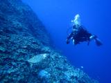 ウミガメと遭遇!ナフタン