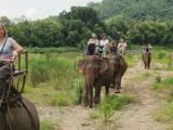 1時間のゆったりとした象乗り体験