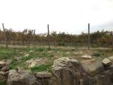 キャンティクラシコ地区POGGIO AMORELLIのぶどう畑
