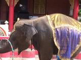 象のショーです。可愛いかったです。