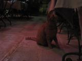 食事をしてると猫がおねだりに来て かわいかったです