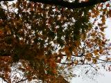 金閣寺と紅葉のコラボが綺麗でした。