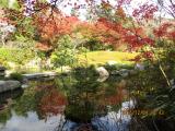 池にも紅葉が映しだされとても綺麗