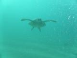 海亀!!!感激のご対面!