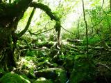 光が差して綺麗な森