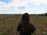 春の葡萄畑