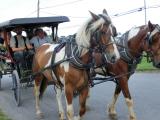 アーミッシュの馬車体験