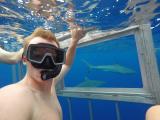 Shark selfie!!