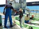 漁から帰ってきた船の見学