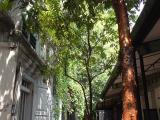 イポーの裏通り。静かでのんびりした時間を楽しめました。