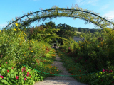 ジヴェルニー 洋庭園